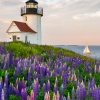Coast of Maine Photo- Curtis Island lighthouse/lupines